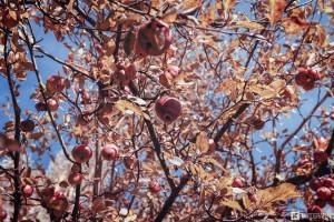 Herbstaepfel2016