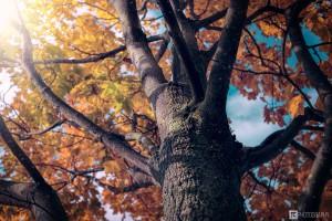Herbstbaum2016