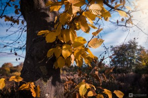 Herbstbaum2016 2