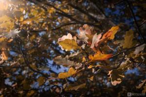 Herbstblaetter2016 2
